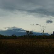 Rice Fields in Rural Laos