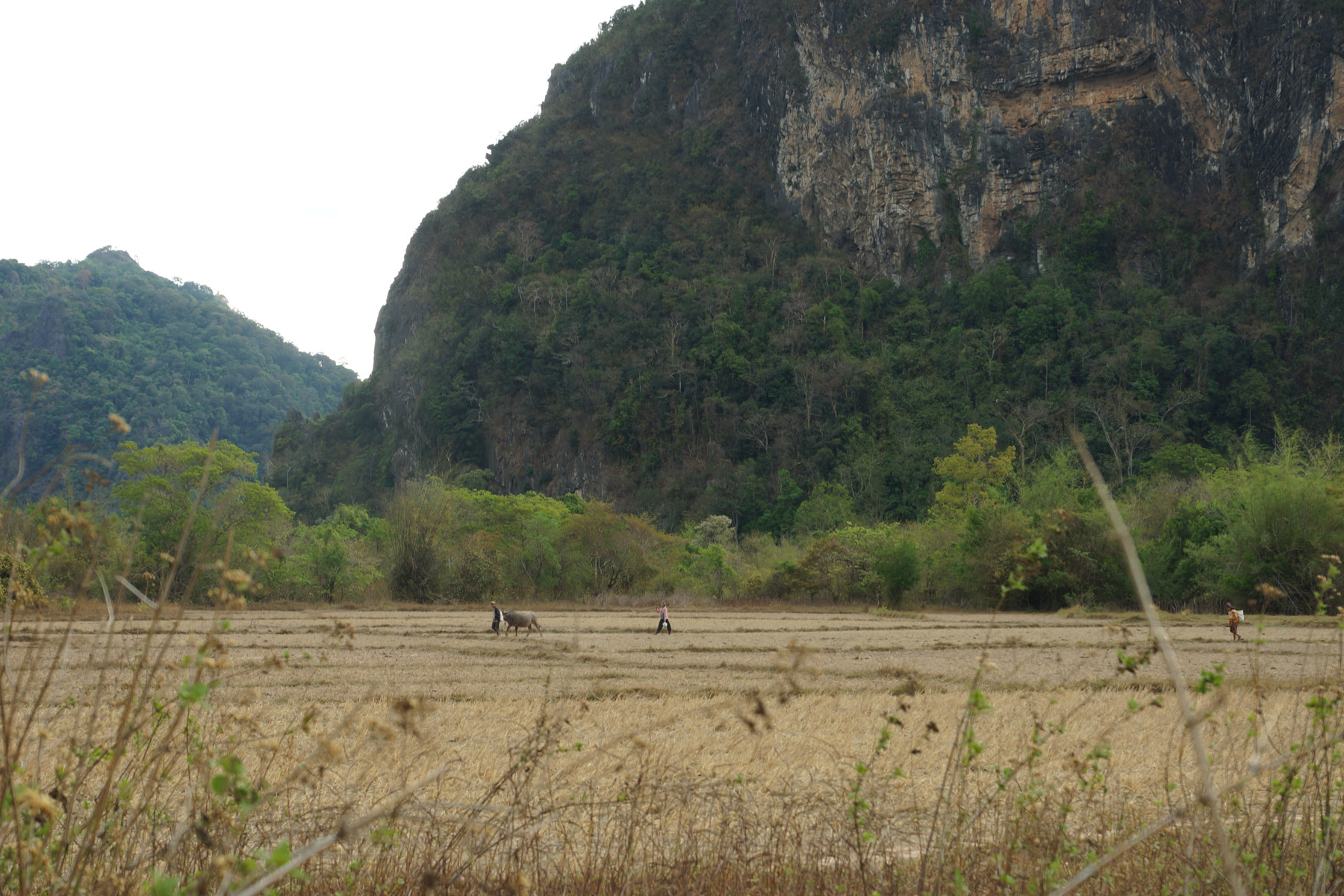 Rice Fields in Rural Laos